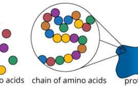 Protein thực vật: Nguồn thay thế hoàn hảo